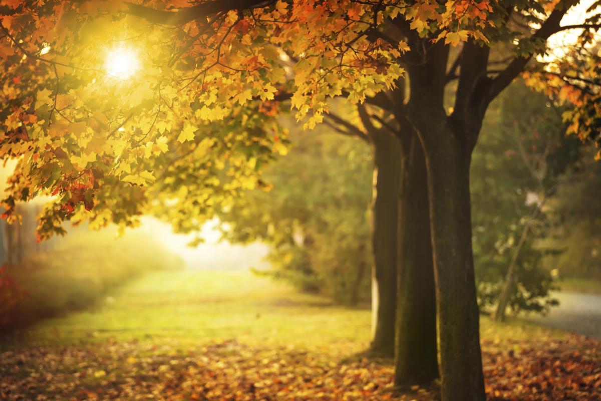 Spiritual Insights for the Holiday Season 2015