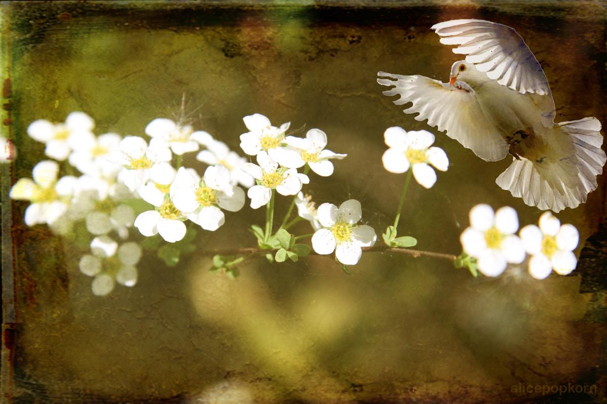 Spiritual harmony